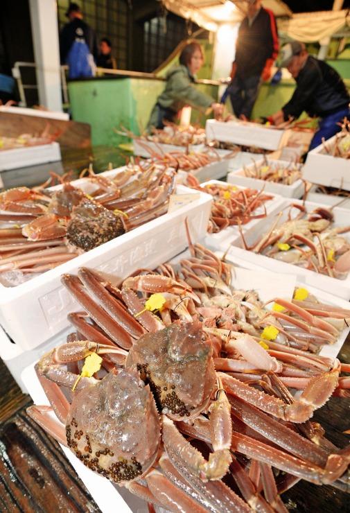 帰港した漁船から次々と水揚げされる越前がに=6日午後5時40分ごろ、福井県坂井市の三国漁港