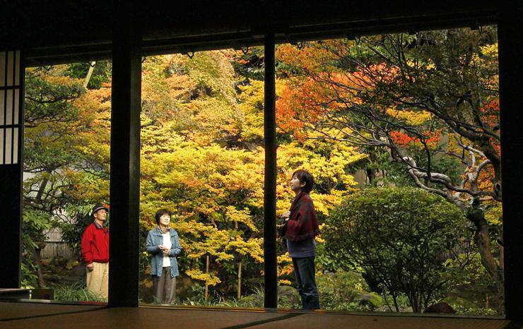 紅葉の見頃を迎えたドウダンツツジ=金沢市大手町の寺島蔵人邸