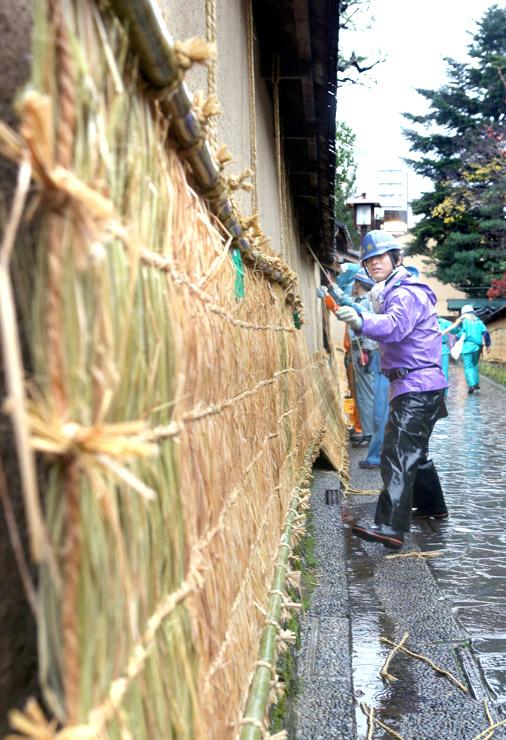 冬の到来を告げる薦掛け作業=金沢市の長町武家屋敷跡