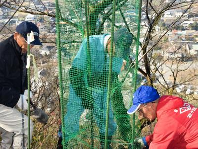安曇野・光城山で桜60本試験植樹