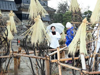松本城本丸庭園に冬の装い 庭木にわらで囲い