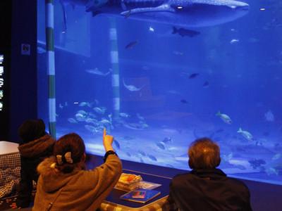こたつに入ってジンベイ観賞 七尾市ののとじま水族館、3台設置