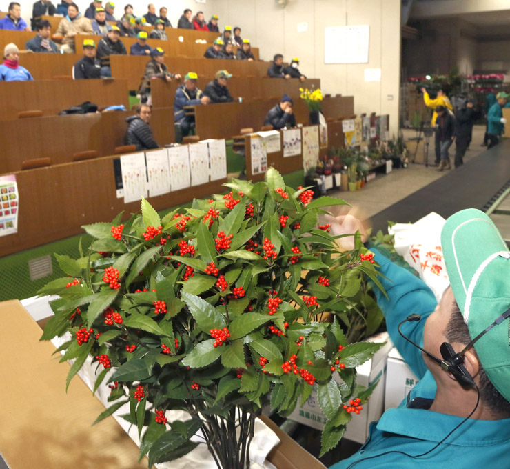 競りに掛けられる正月用の花=9日午前7時5分、金沢市公設花き地方卸売市場