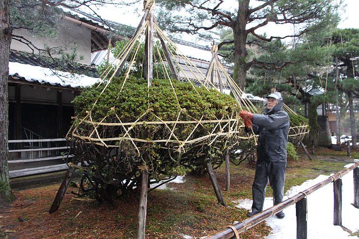 雪つり作業が進む北方文化博物館の庭園=11日、新潟市江南区