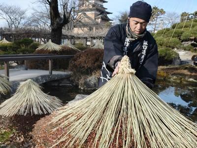 高島城の樹木、冬の装い わらぼっち・根巻き...温かみ