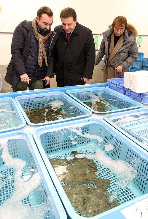 水揚げされた魚を見て回るオンダリビア市の一行=新潟市中央区