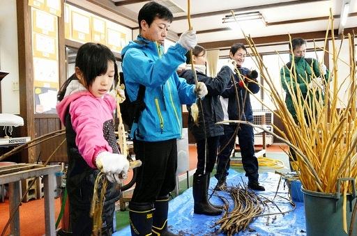 和紙の原料となるこうぞの皮はぎを体験する参加者=20日、福井県越前市新在家町のパピルス館