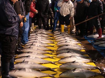 「ひみ寒ぶり」漁の開始宣言 初日は211本