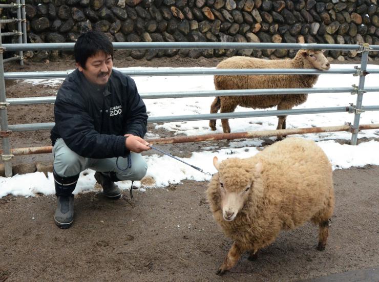 新年特別イベントで来園者が一緒に記念撮影ができる羊=須坂市動物園
