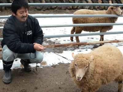 えとの羊と記念撮影を 須坂市動物園、新年催し