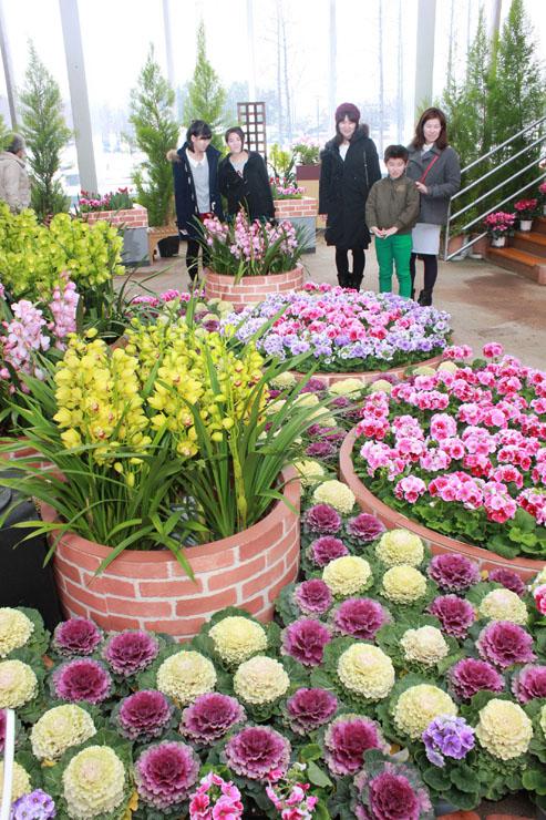 チューリップやプリムラ、葉ボタンなどが並ぶチューリップ四季彩館のテラス展示「花・万華鏡~新春のチューリップ~」。2月3日まで