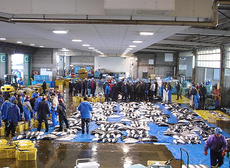 氷見魚市場に並んだ「ひみ寒ぶり」 =氷見市比美町
