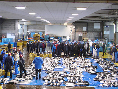 来た~「ひみ寒ぶり」2772本 氷見漁港今季最多