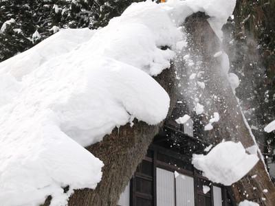 今年初の屋根雪下ろし 相倉合掌造り集落