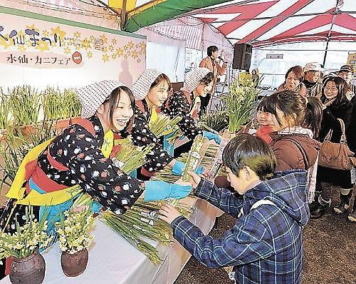 2014年の水仙まつりで来場者に水仙を配る水仙娘=福井県越前町厨のアクティブハウス越前