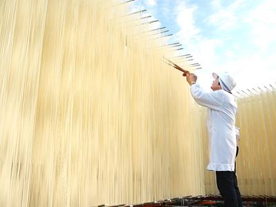 青空の下天日干し 砺波の大門素麺