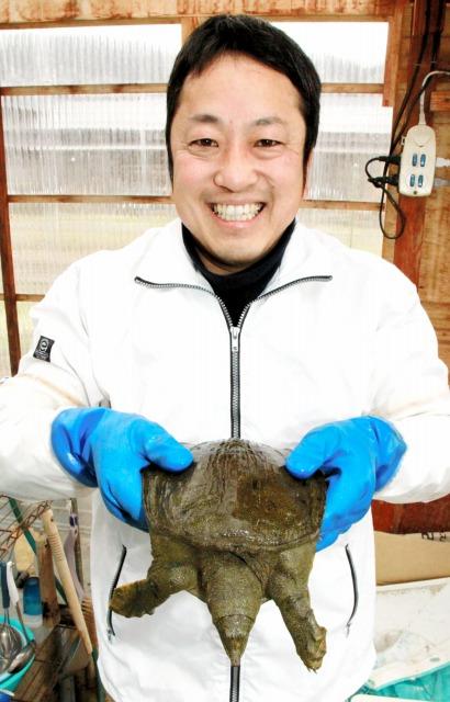 若狭の水と餌で育てられたスッポン=21日、福井県若狭町海士坂の「若狭すっぽん養殖場」