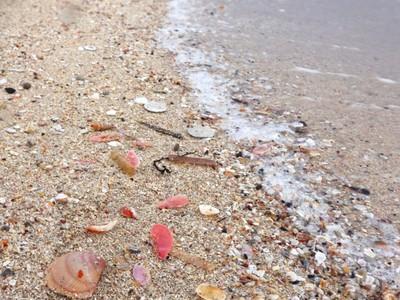貝寄せの風に誘われ 志賀・増穂浦、色とりどり