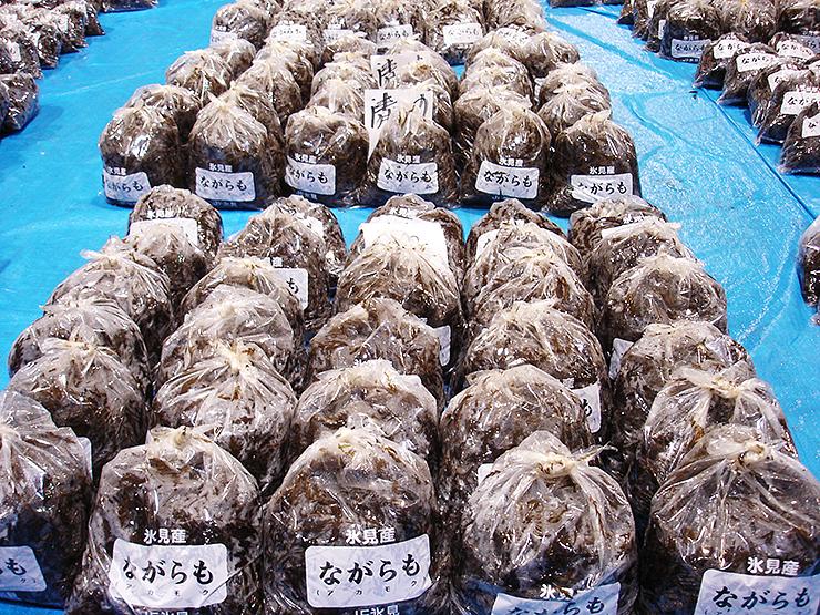 氷見魚市場に並んだナガラモ。初日は300キロ余りが出荷された