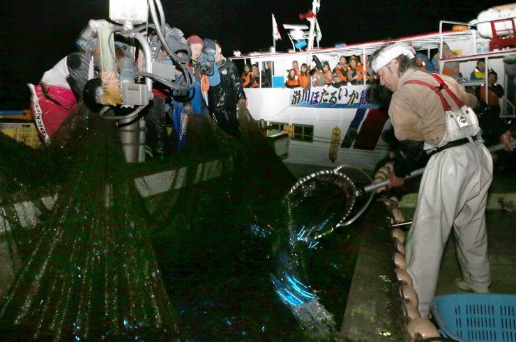 観光船の間近で引き揚げられ、青白い光を放つホタルイカ(2014年)