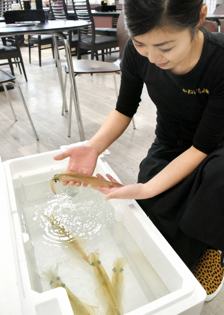 その場で刺し身にして食べられるヤリイカ=福井県越前町厨の道の駅「越前」