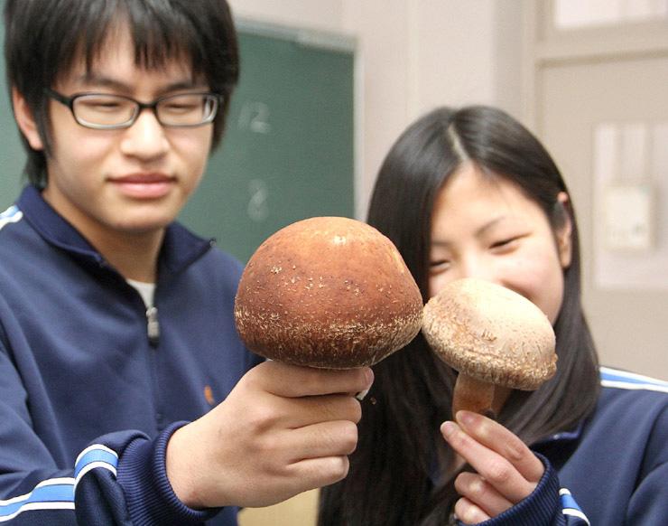 生徒が収穫したのとてまり。右が通常サイズで、左がジャンボサイズ=穴水高