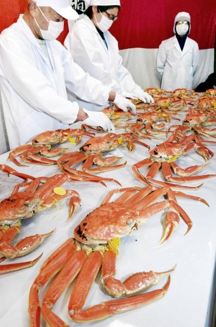 従業員が1匹ずつ丁寧に調理し、皇室に届けられる越前がに=19日夜、坂井市三国町宿1丁目の伊野魚問屋