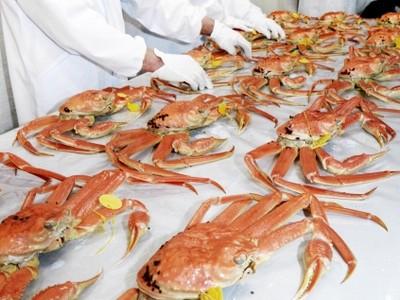 鮮やか越前がに、皇室へ 坂井・三国 鮮魚店が調理