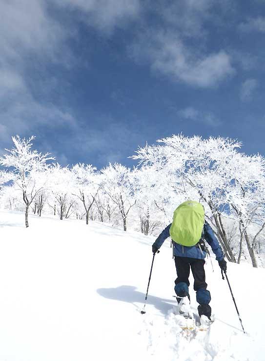 スノーシュートレッキングで散策するコースを下見するガイド(なべくら高原・森の家提供)