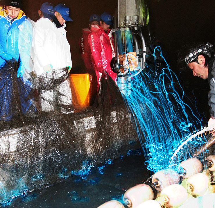 解禁となったホタルイカ漁。定置網を起こすと、青白い発光が見られた=1日午前5時4分、滑川市沖