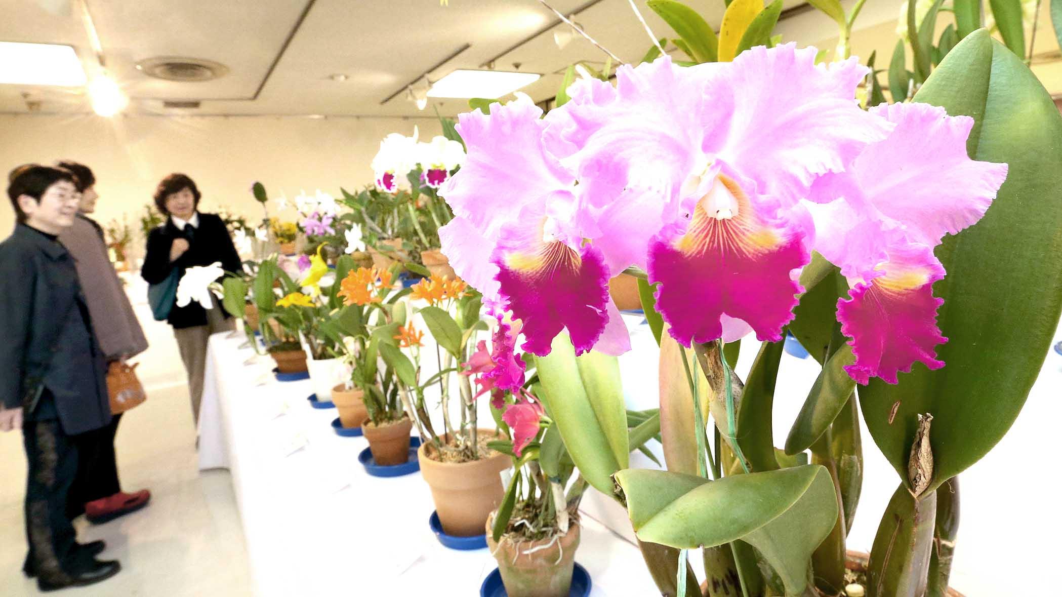 鮮やかに咲くランを観賞する来場者=4日午前10時半、金沢市のめいてつ・エムザ
