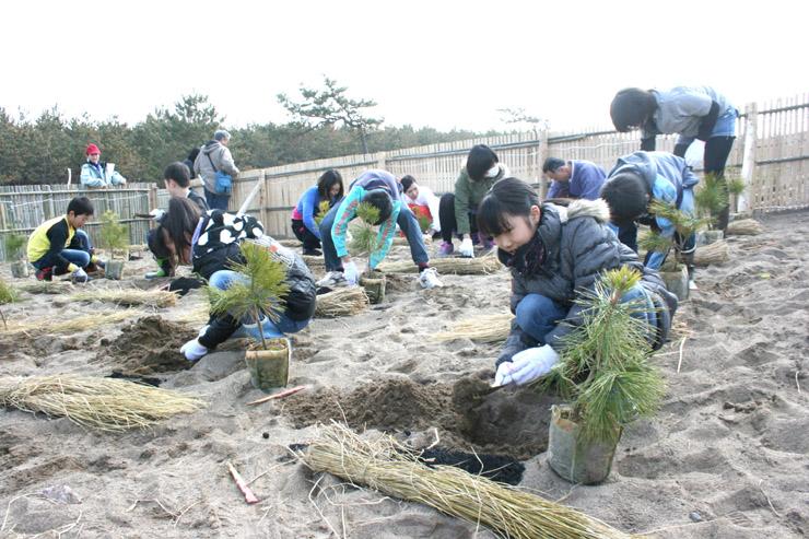 クロマツの苗木を植える児童=小松市の安宅林国有林