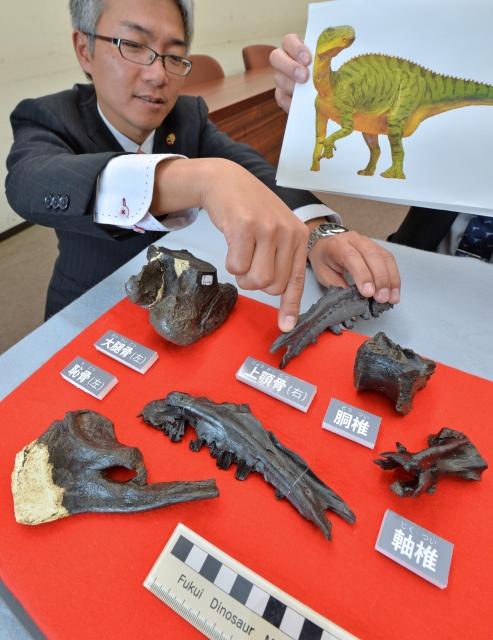 新種の「コシサウルス・カツヤマ」の化石について説明する福井県立恐竜博物館の研究員。上あごの骨が決め手になった=福井県庁