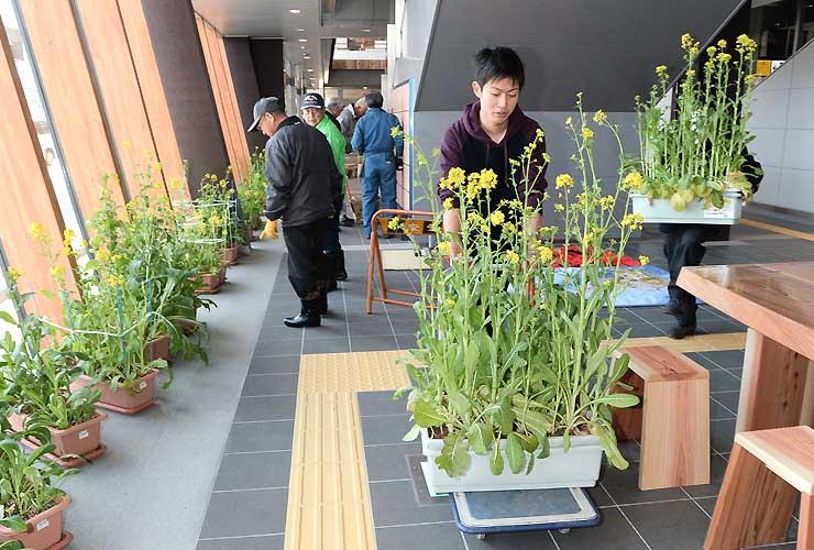 利用客をもてなそうと飯山駅に菜の花を運び込み、飾り付ける住民や高校生ら=13日午前9時58分、飯山市