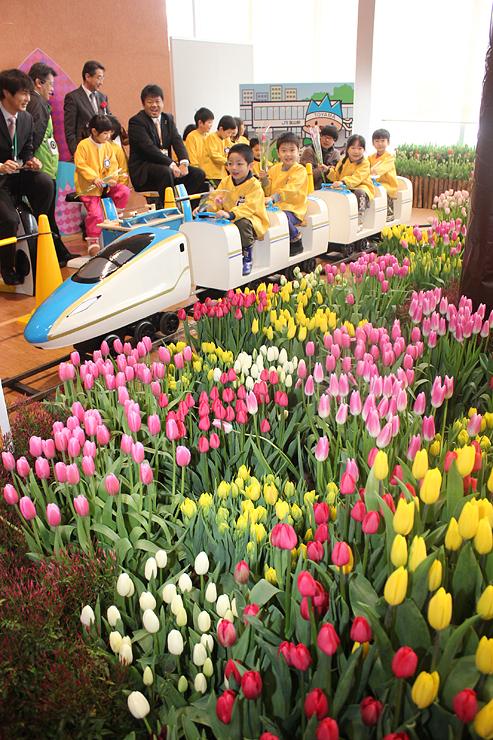 ミニ新幹線に乗ってチューリップを見る園児