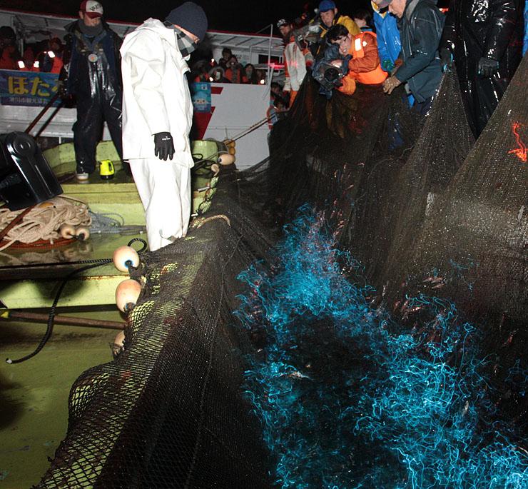 北陸新幹線開業に合わせて一足速く特別運航された「ほたるいか海上観光」。青白い光を放つ漁に観光船の乗客から歓声が上がった=滑川沖