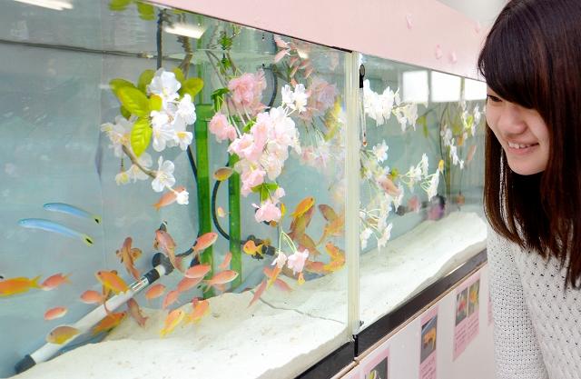 花の名前が付いた魚などを集めた特別展=18日、坂井市三国町の越前松島水族館