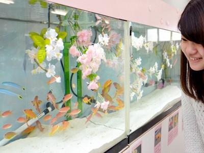 春の花ちなむ魚100匹 福井県坂井市 松島水族館で特別展