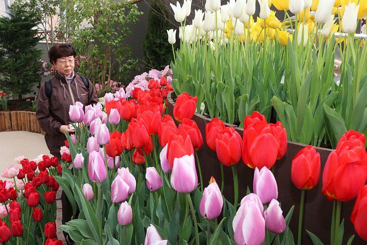 たくさんの品種が並ぶ県立植物園のチューリップ展(20日、新潟市秋葉区)