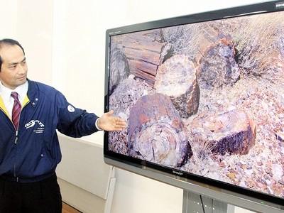 石になった木「珪化木」分かる映像 福井県立恐竜博物館で上映