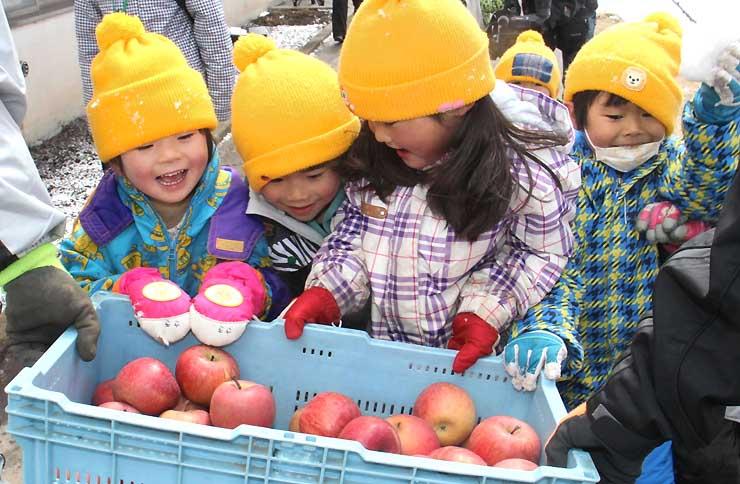 届いた「スノーアップル」に喜ぶ園児たち