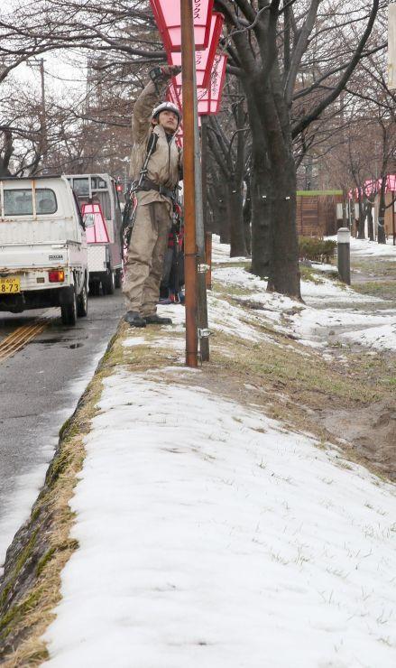 雪がうっすらと積もった高田公園で、ぼんぼりを取り付ける作業員=25日、上越市