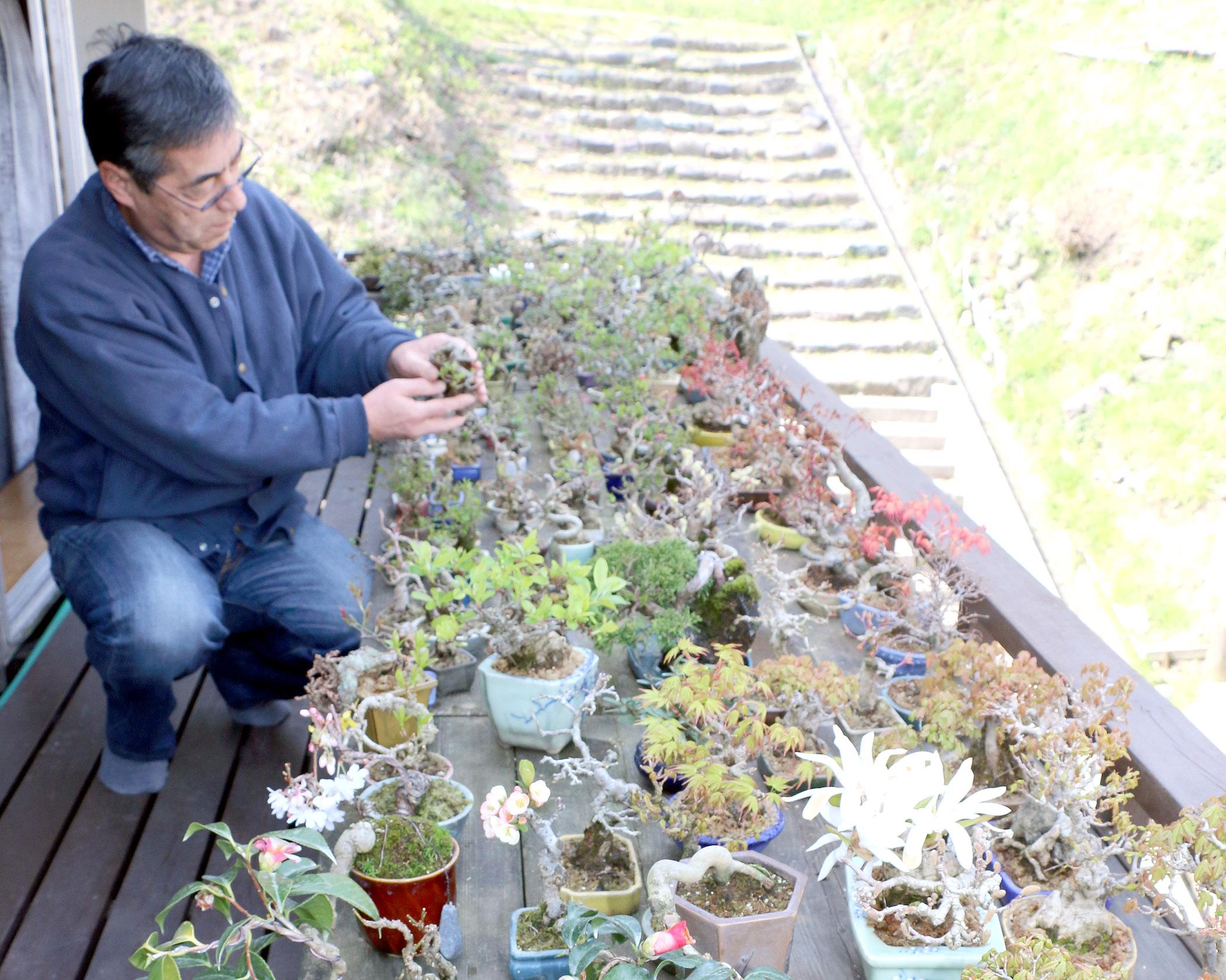 開花や芽吹きを迎え、見頃となった盆栽=輪島市鳳至町