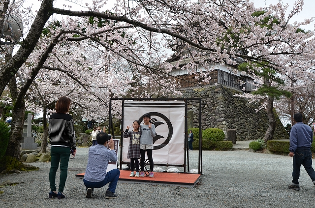 見ごろを迎えた桜と天守閣をバックに記念撮影する家族連れ=4日、福井県坂井市の丸岡城