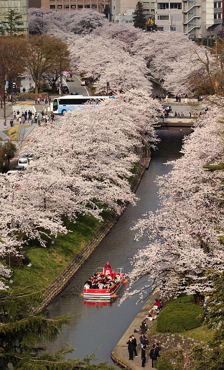 桜が満開となり、大勢の花見客が訪れた松川べり=富山市丸の内の市立図書館屋上から撮影
