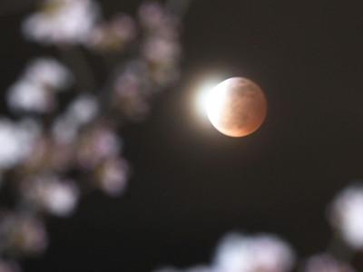 松本城の桜開花宣言、皆既月食も各地で観測
