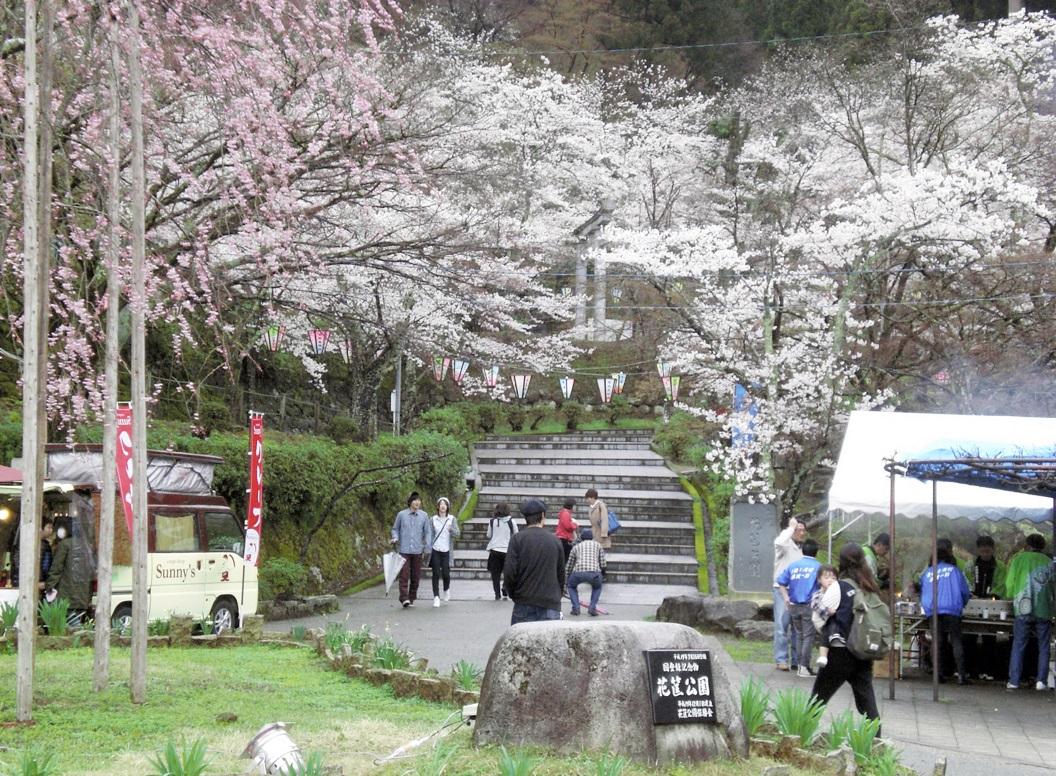 家族連れらが花見に訪れた「はながたみまつり」の会場=5日、福井県越前市粟田部町の花筐公園