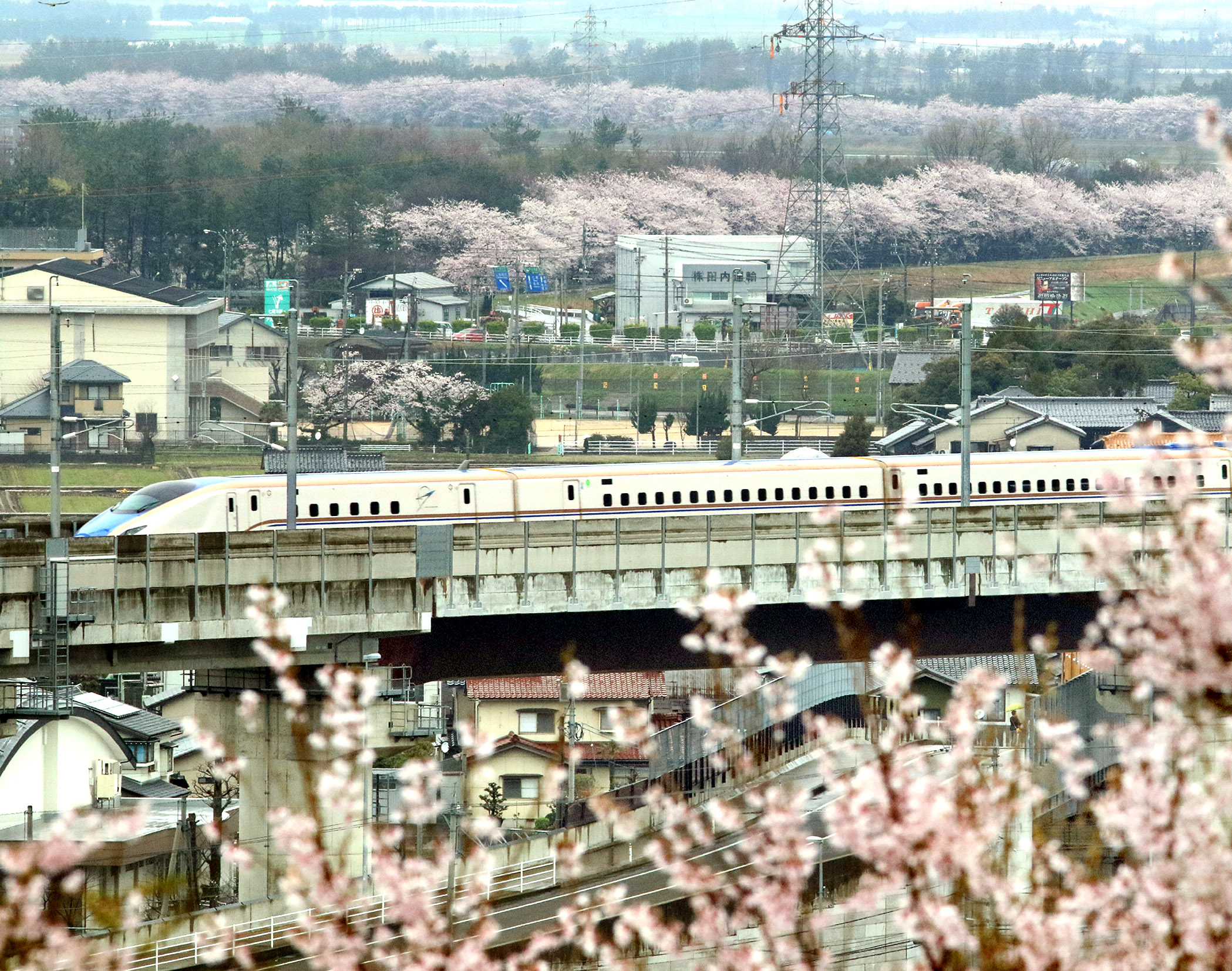 桜が咲き誇る風景の中を走る北陸新幹線の車両=金沢市吉原町