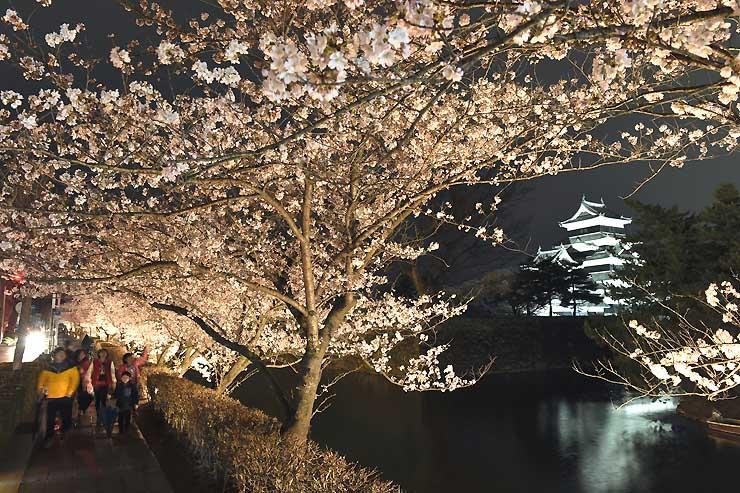 ライトアップで浮かび上がった松本城外堀の桜=6日午後6時52分、松本市