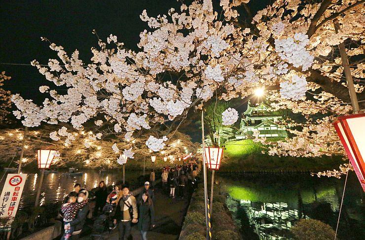 ライトアップされた高田公園の桜。花冷えの中、多くの人が訪れた=8日午後7時前、上越市